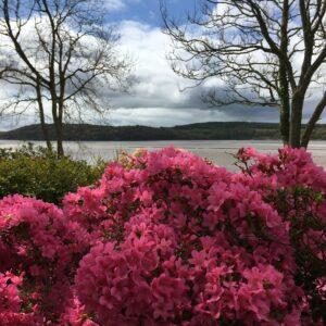Elm Cottage Garden in Bloom (4)